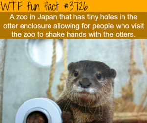 adorable, fact, and otters image