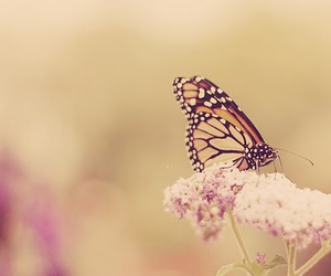 butterfly, cute, and flower image