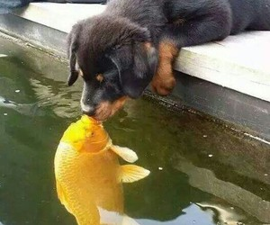 dog, fish, and kiss image