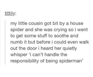spider, spiderman, and funny image