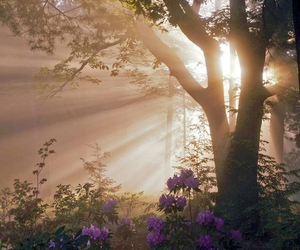 light and nature image