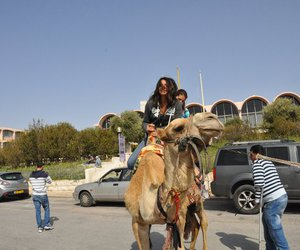 camel, israel, and ride image