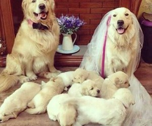 dog, love, and family image