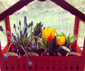 flowers, greenhouse, and tulips image