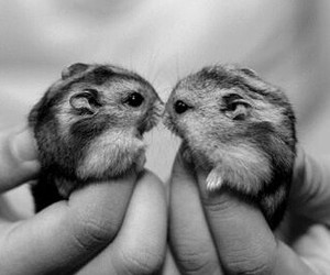 animal and hamster image