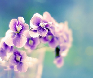 flowers, violet, and purple image
