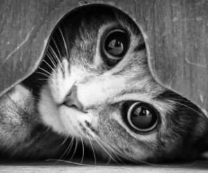 animals, black and white, and cute image
