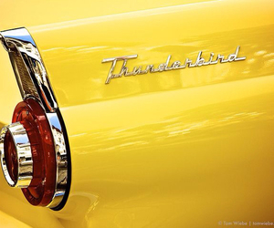 thunderbird and yellow image