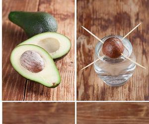 avocado, growing, and water image
