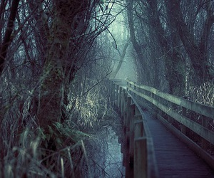 bridge, photography, and nature image