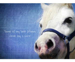 best friends, friendship, and horse image