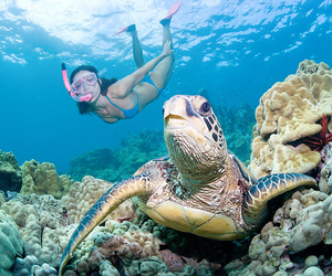 turtle, girl, and ocean image