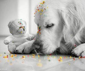 bear and dog image