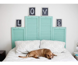 bed, dog, and room image