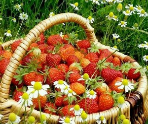 strawberry and nature image
