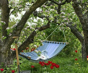 garden and hammock image