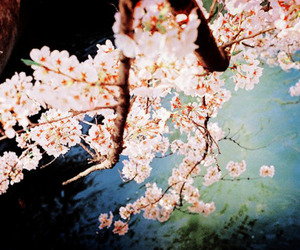 flowers, cherry blossom, and photography image
