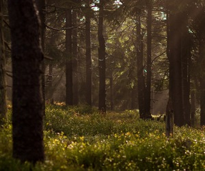 fantasy, forest, and new moon image