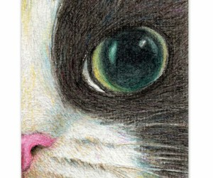 cat, cats, and colored pencil image