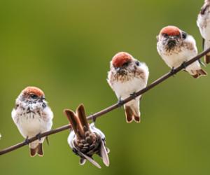 animals, birds, and nature image