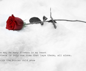 flower, snow, and love image