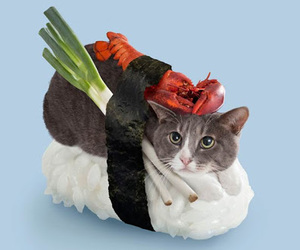 cat, sushi, and kawaii image