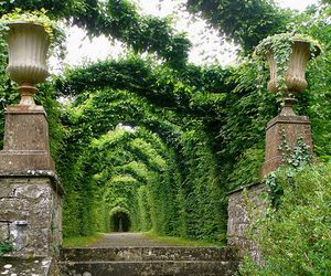 garden, green, and nature image