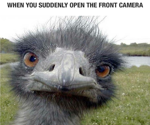 funny and camera image