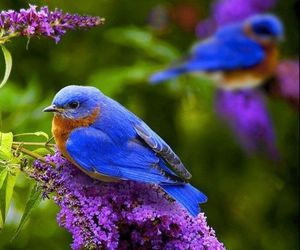 birds and blue image