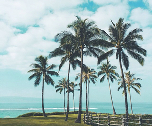 beach, palmtrees, and summer image