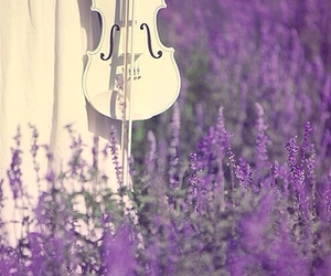 violin, purple, and white image