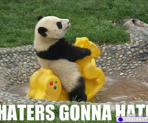 panda, haters, and funny image