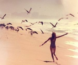 beach, summer, and bird image
