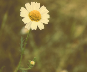 canon, daisy, and flor image