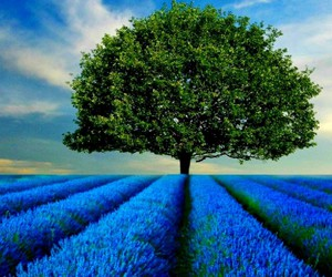 tree, .... alone, and ..:field image