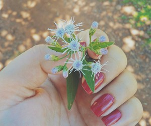 beauty, flower, and cute image
