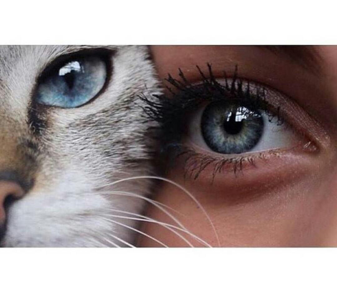 картинка глаз человека и кота как правильно