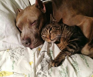 animal, friends, and love image