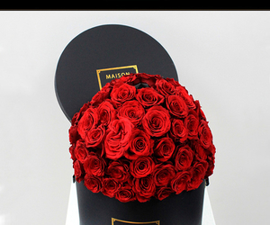 stunning, red roses pretty, and amazing beautiful omg image