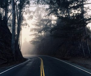 road, forest, and travel image