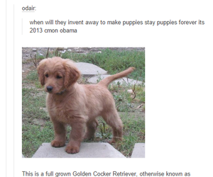 puppy, tumblr, and dog image