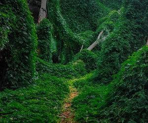 forest, landscape, and landscapes image