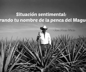 mexico, maguey, and penca image
