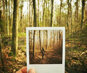 photography, forest, and polaroid image
