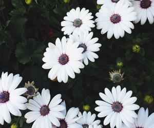 daisies, daisy, and disney image