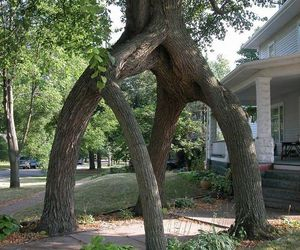 tree, nature, and photo image