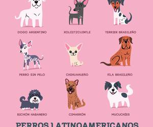dog and perros image