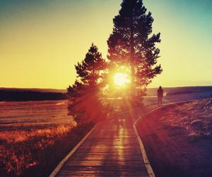 nature, sun, and tree image