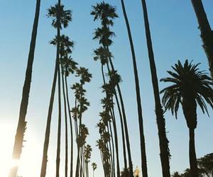 summer, california, and nature image