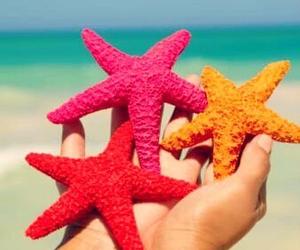 summer, beach, and stars image